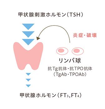 甲状腺刺激ホルモン(TSH)の図