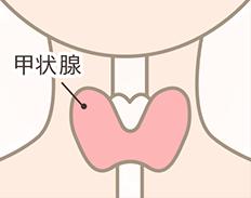 甲状腺のイラスト